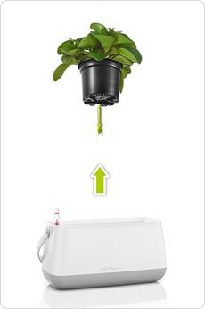 Borsetta per piante YULA con un nuovo sistema