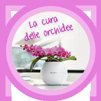 Consigli e suggerimenti per la cura delle orchidee