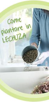 Wie bepflanze ich LECHUZA
